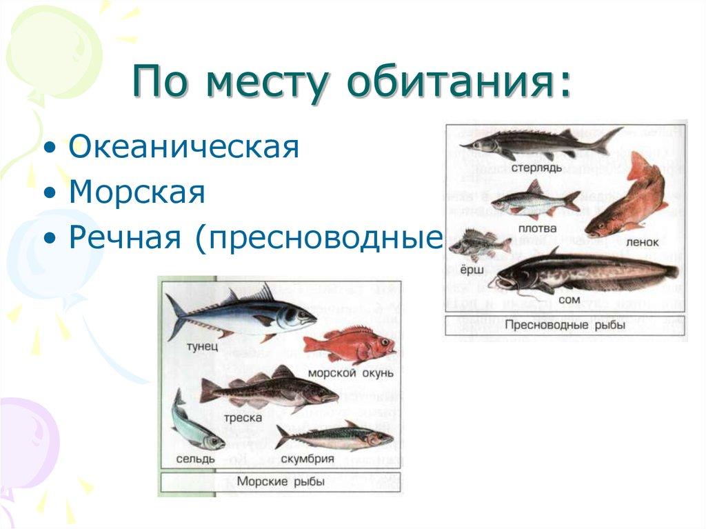 Речные и морские рыбы доклад 6988