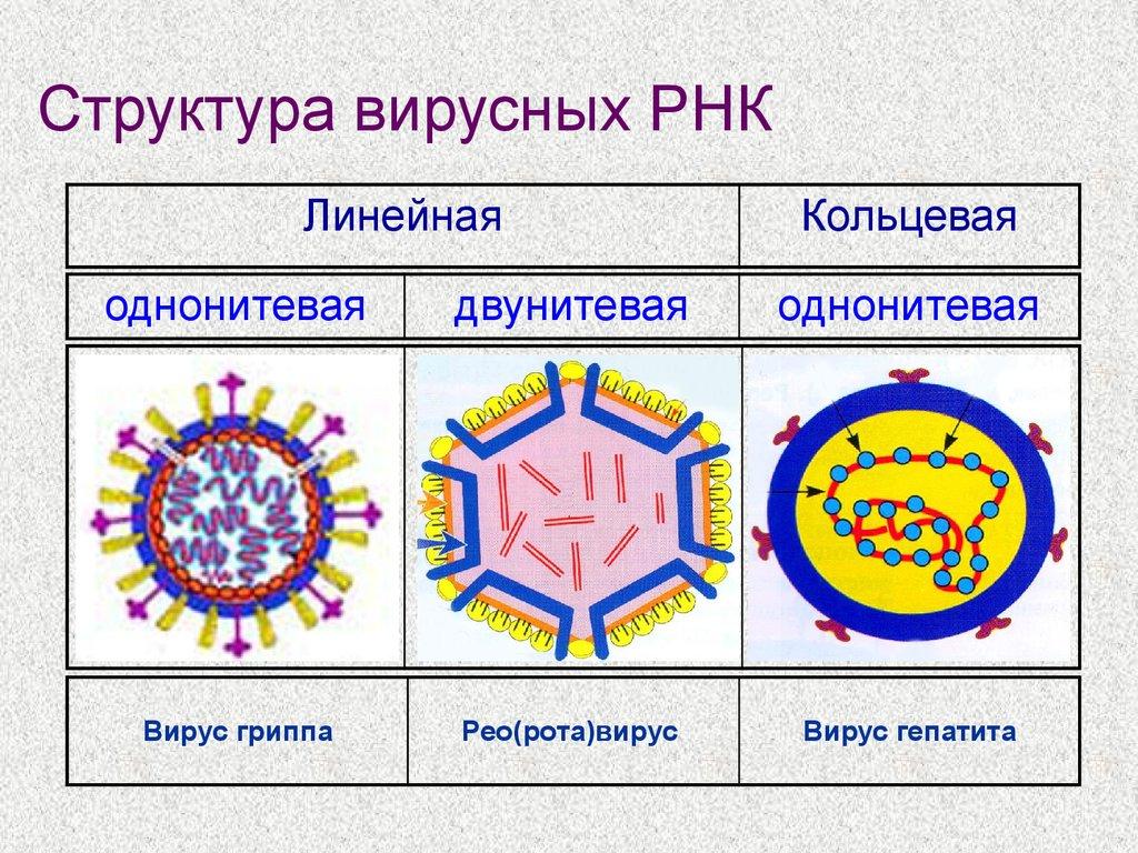 Virusi rota. rota virus