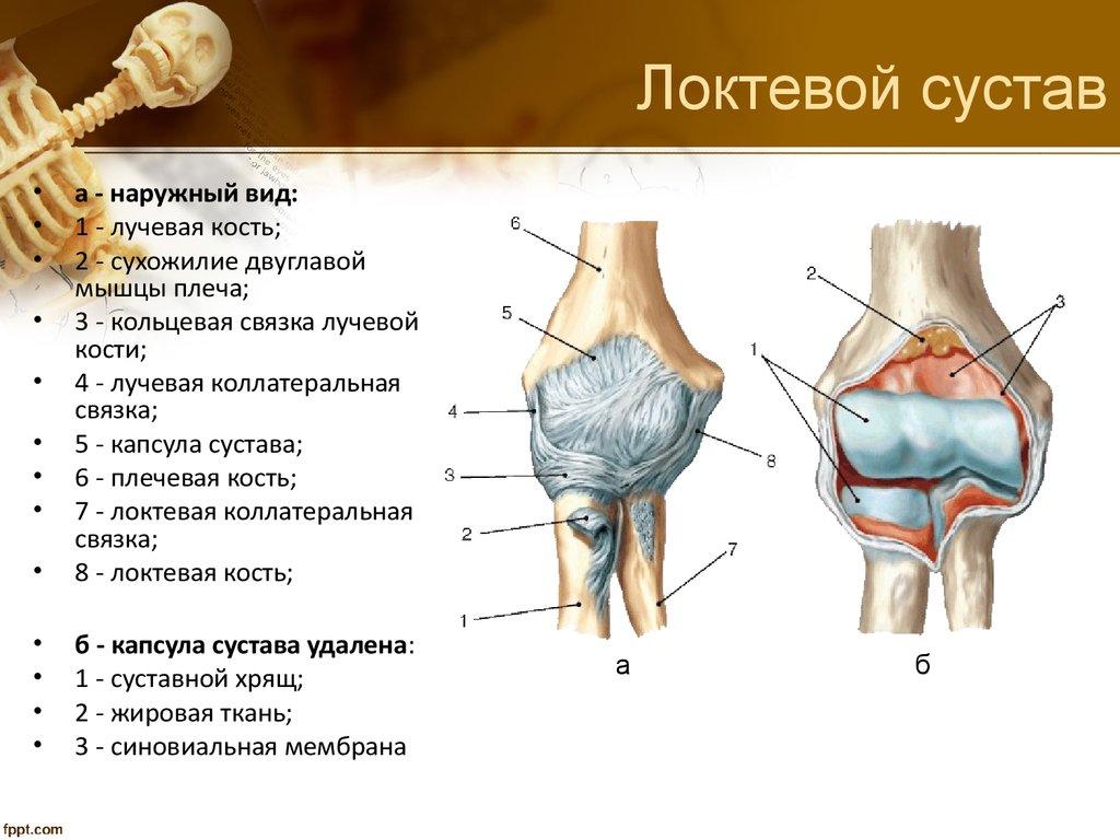 формы локтевого сустава