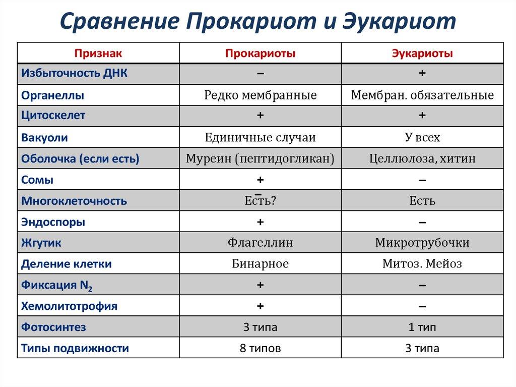 фотосинтез у прокариот и эукариот заключенные нем