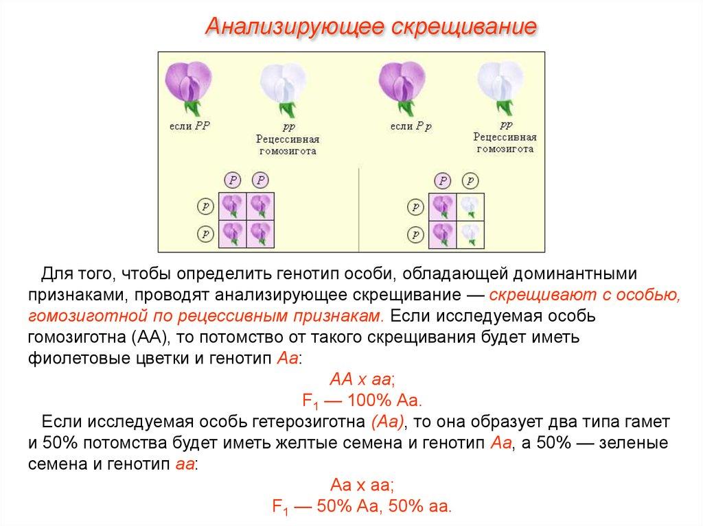 Доминантные гомозиготные гетерозиготные рецессивные генотипы особей