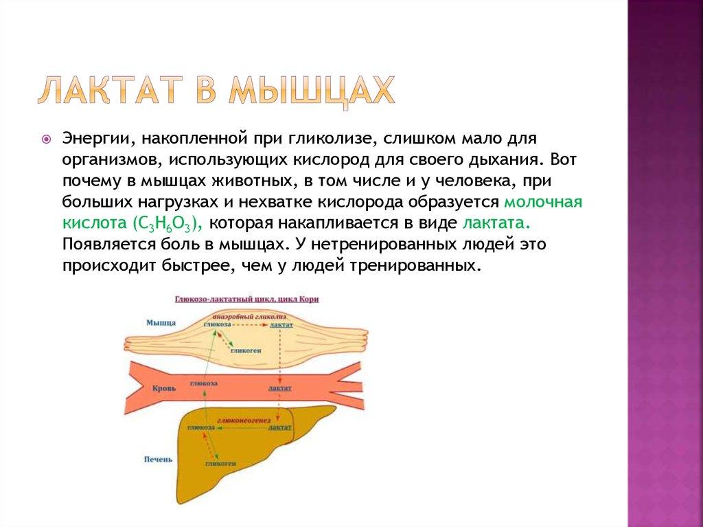 Диабет и молочная кислота в мышцах