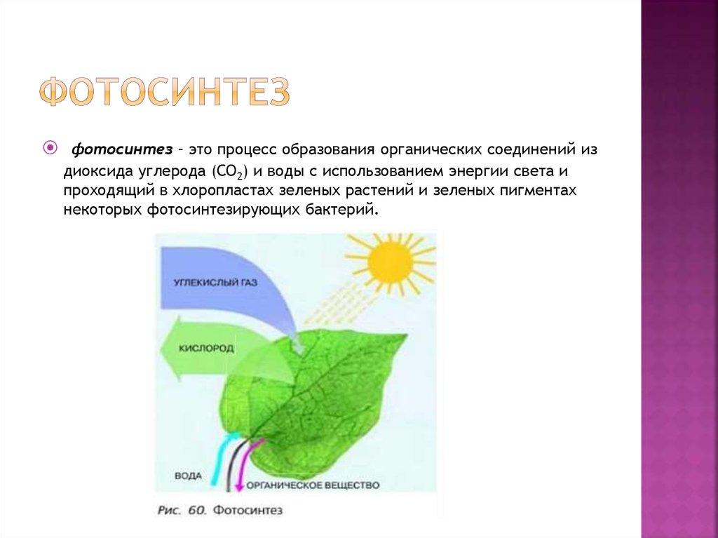 здоровье схема процесса фотосинтеза фото наклейки