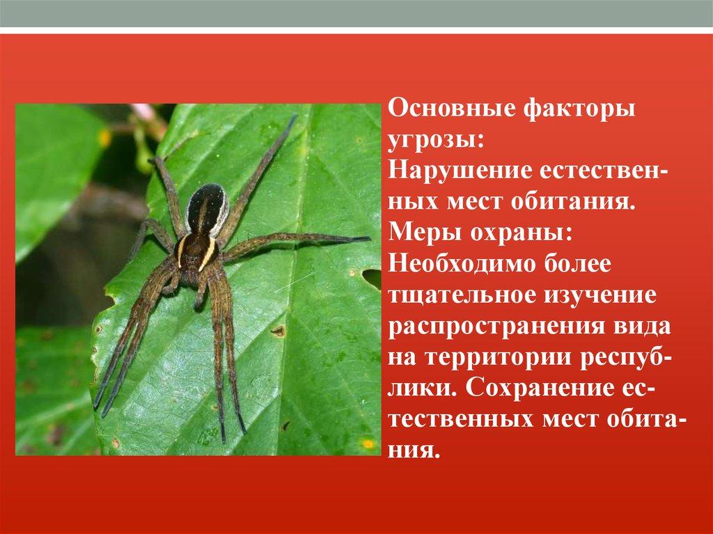 Самые интересные животные Красной книги Московской области