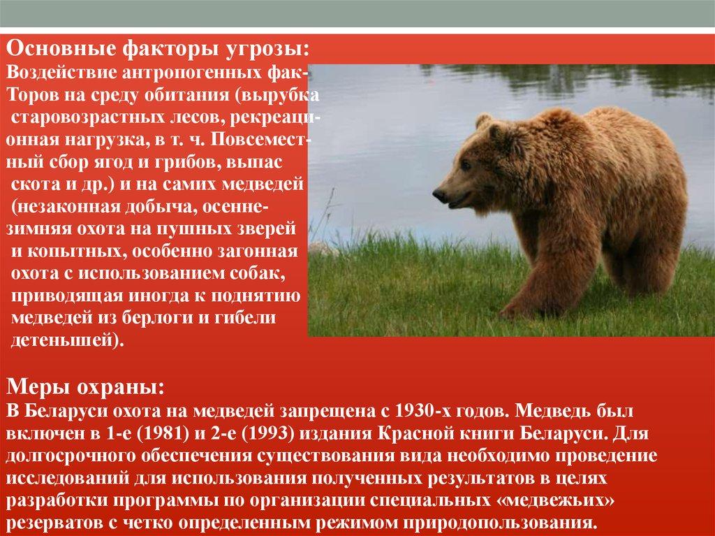 Животные Красной книги России Воронежской Области