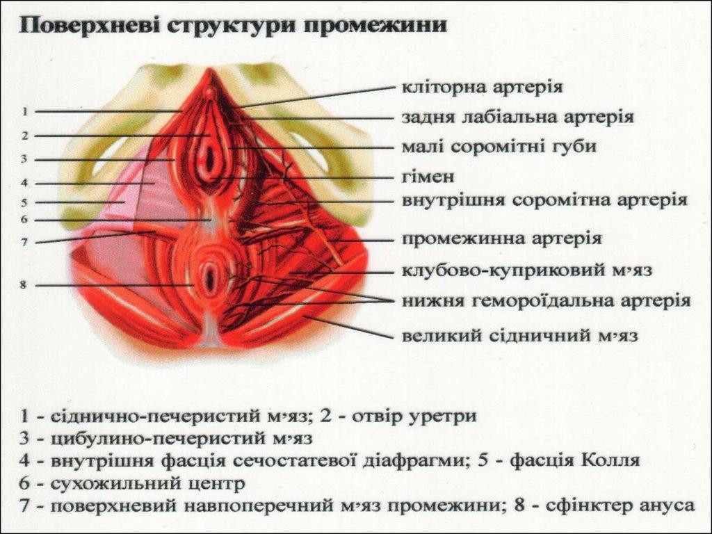 Русский женских половых — img 10