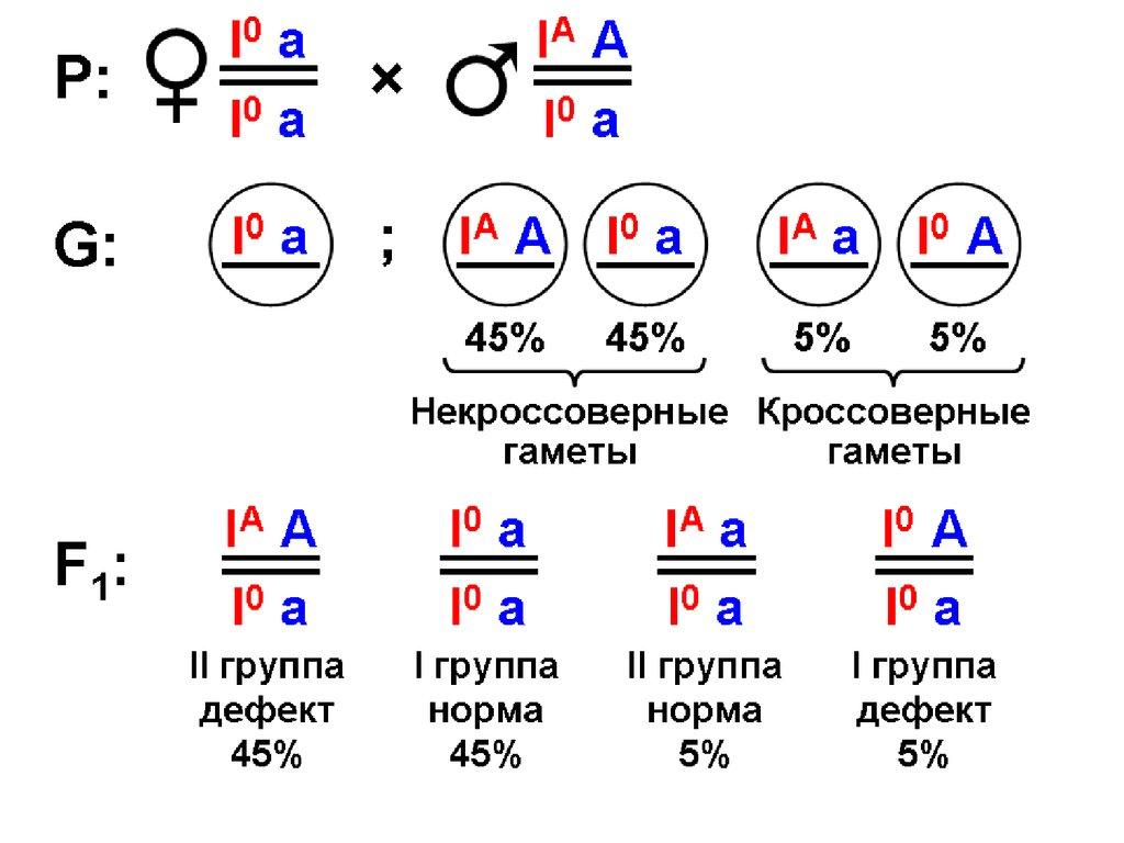 Задачи по генетике с решением кроссинговер задачи на эластичность спроса по цене с решением