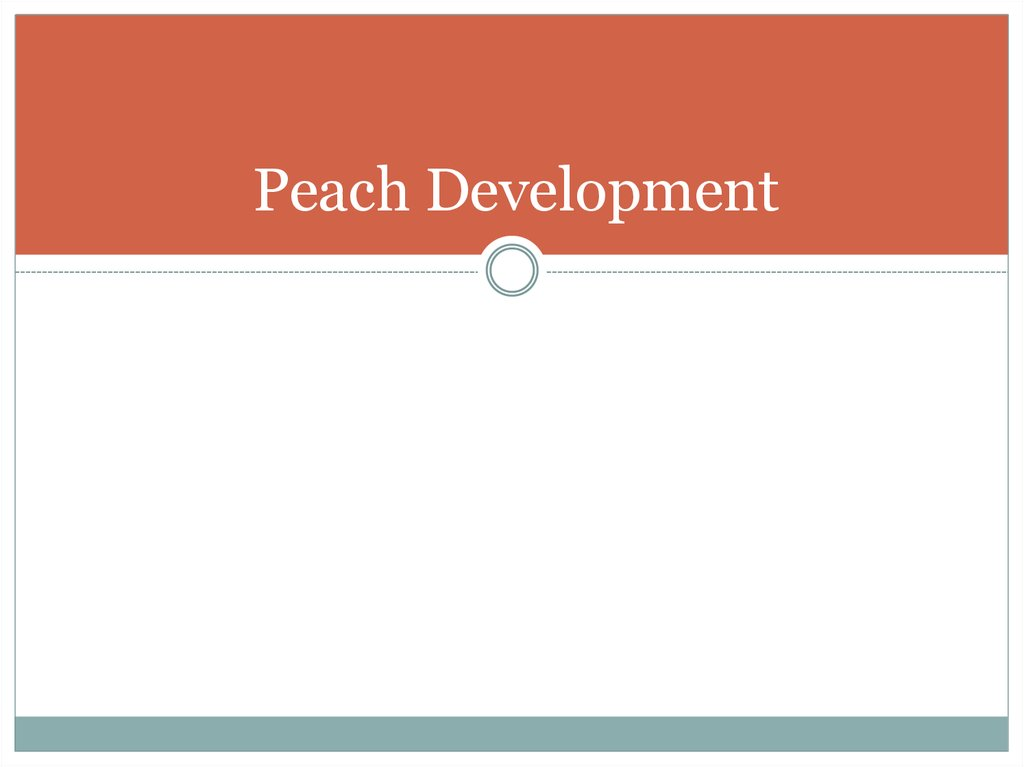 Peach Development