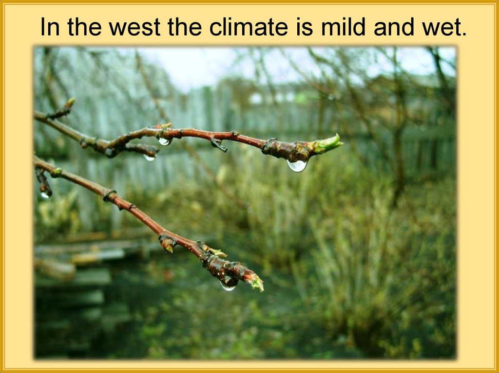 In the west the climate is mild and wet.