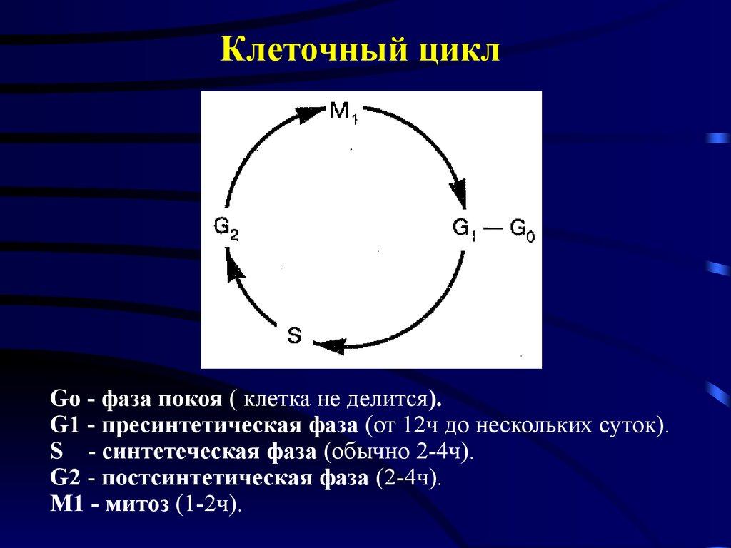 Лимфангиография