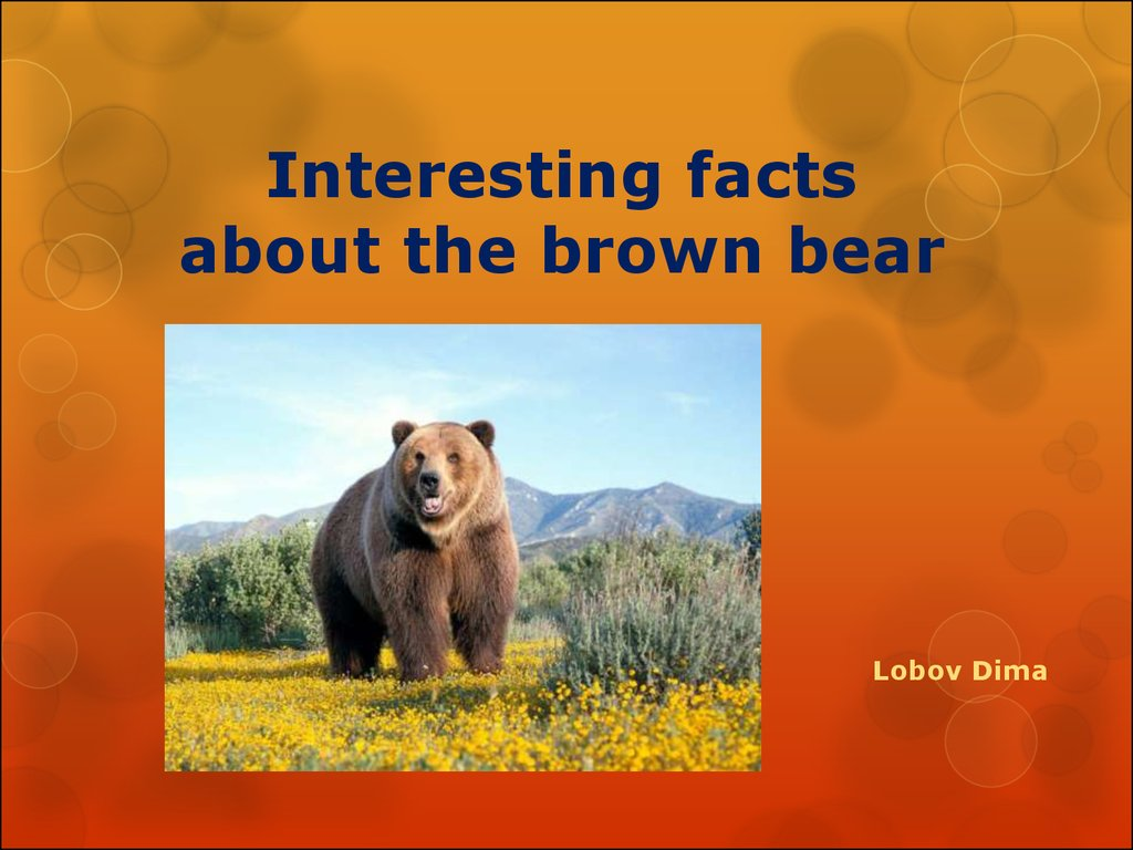 Interesting facts about the brown bear - презентация онлайн - photo#16