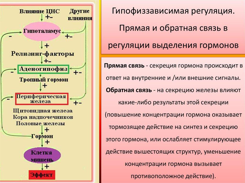 гипоталамические гормоны либерины и статины