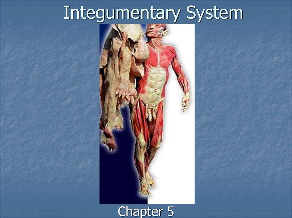 Integumentary system - online presentation