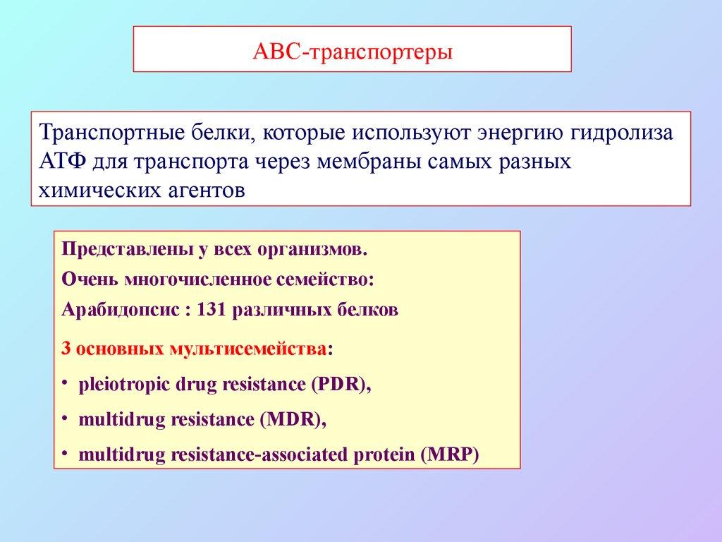 Abc транспортеры биологическая роль регуляция тюнинг салона транспортер т4 своими руками