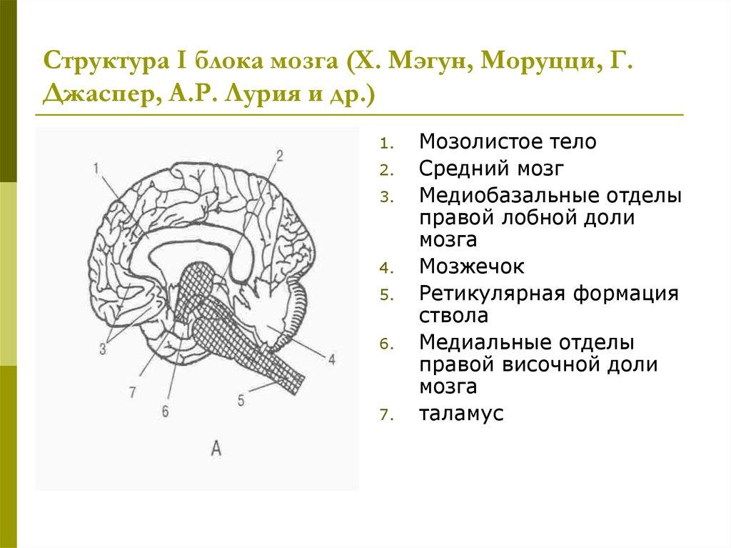 Девушка модель работы мозга по лурии вольф оставить отзыв