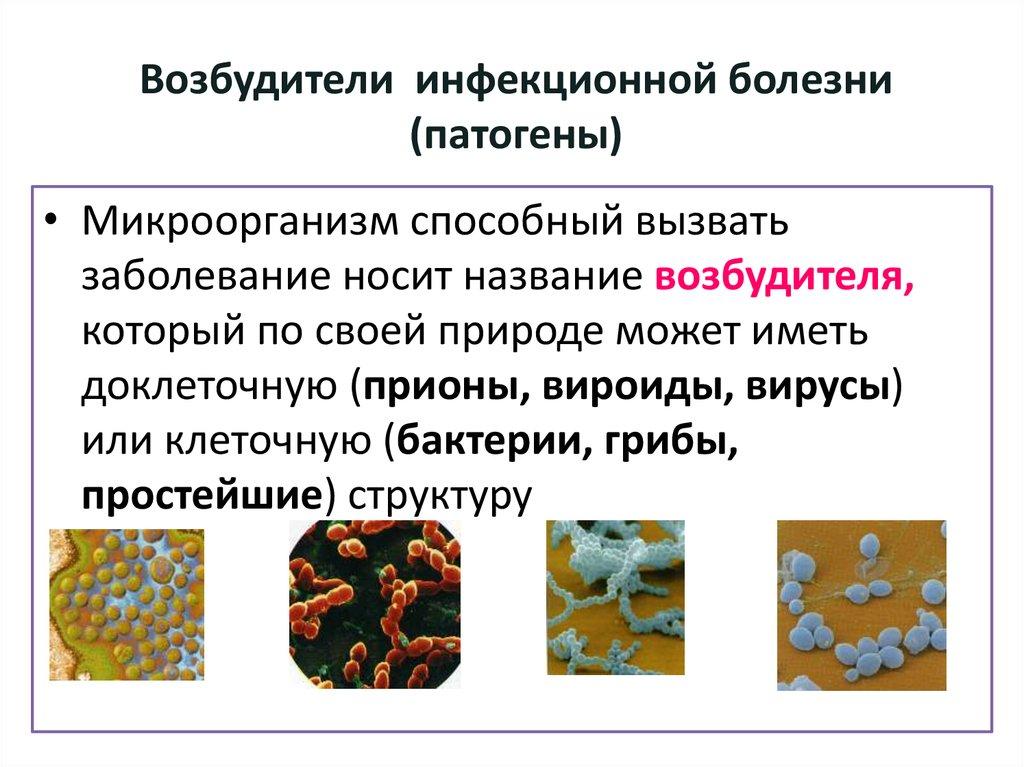 микробиологическая диагностика инфекционных заболеваний вызванны бесплатных