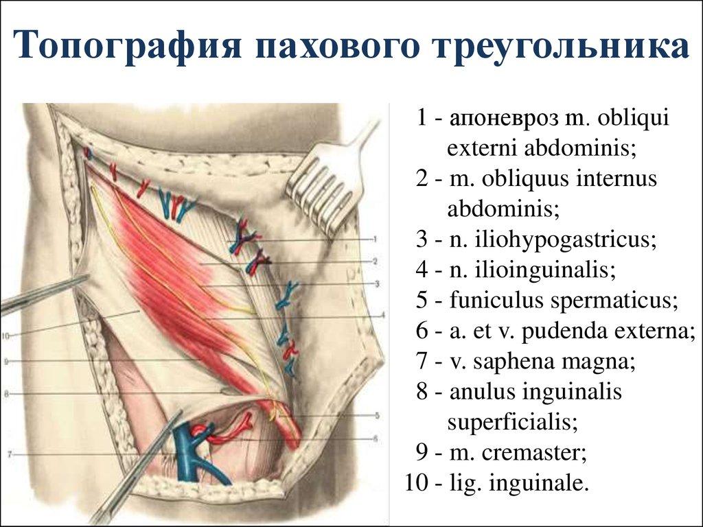 топографическая анатомия и оперативная хирургия передней брюшной