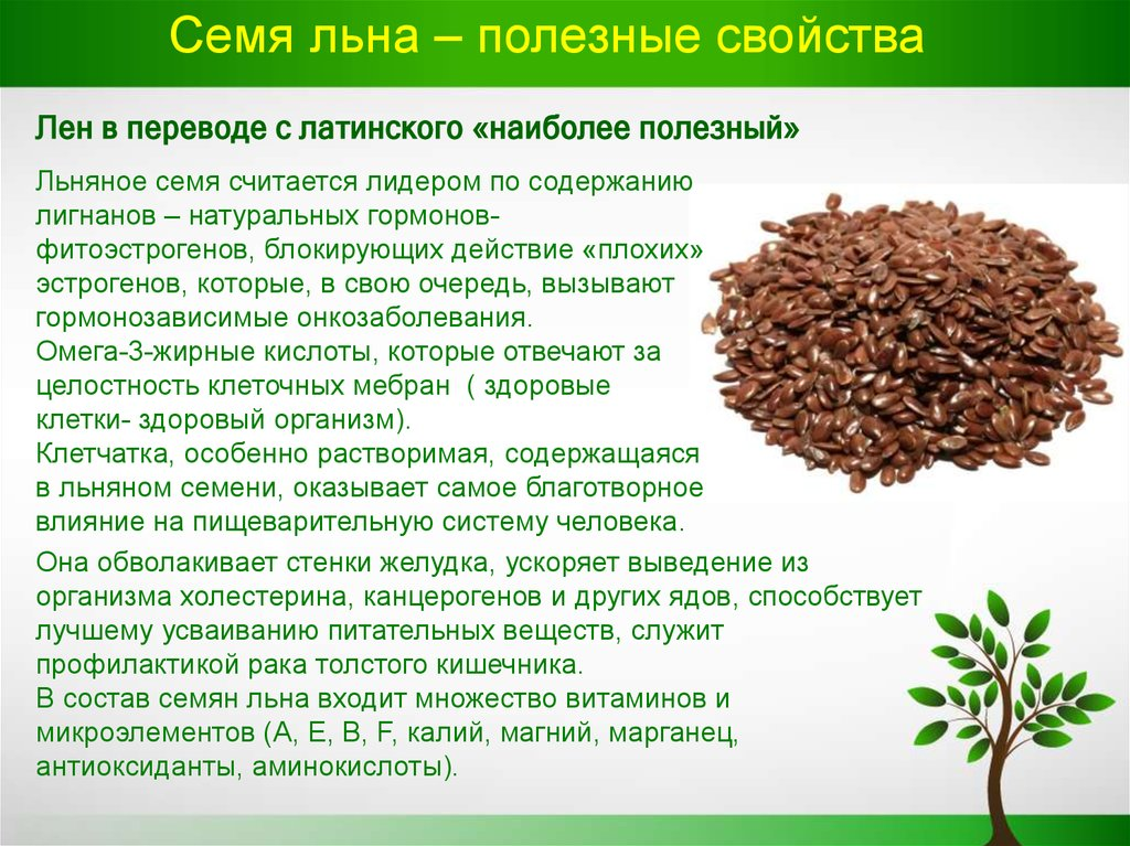Какие семена льна полезнее белые или коричневые