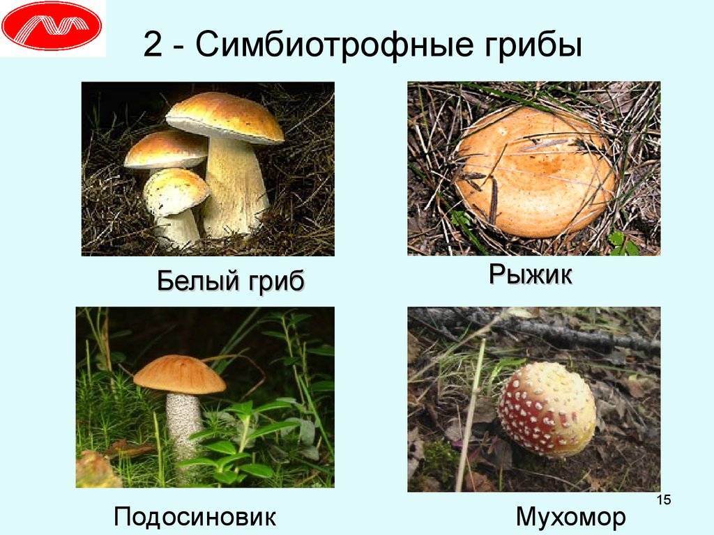 Грибы Дёшево Старый Оскол спайс список запрещенных