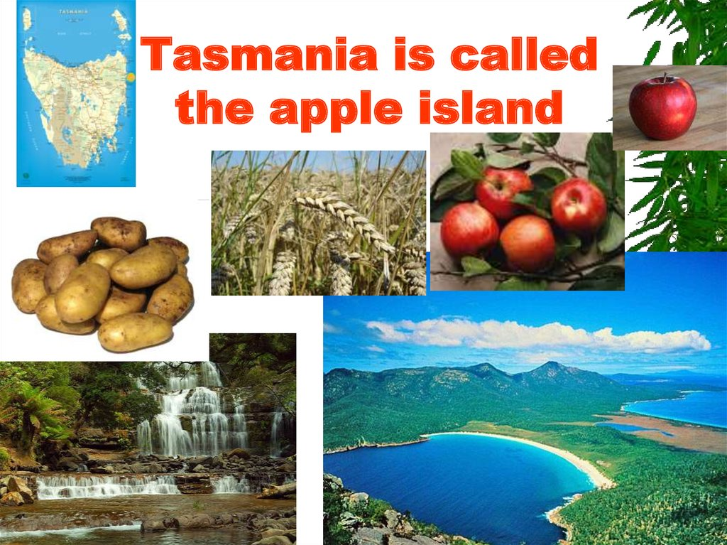 Tasmania is called the apple island