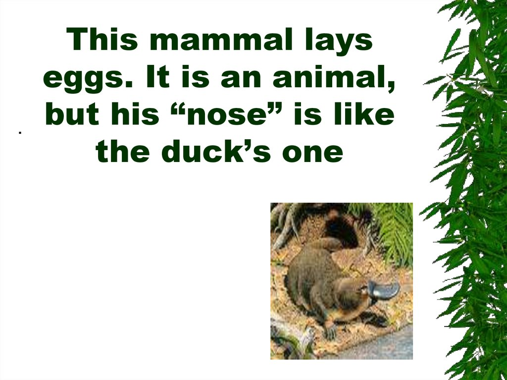 "This mammal lays eggs. It is an animal, but his ""nose"" is like the duck's one"