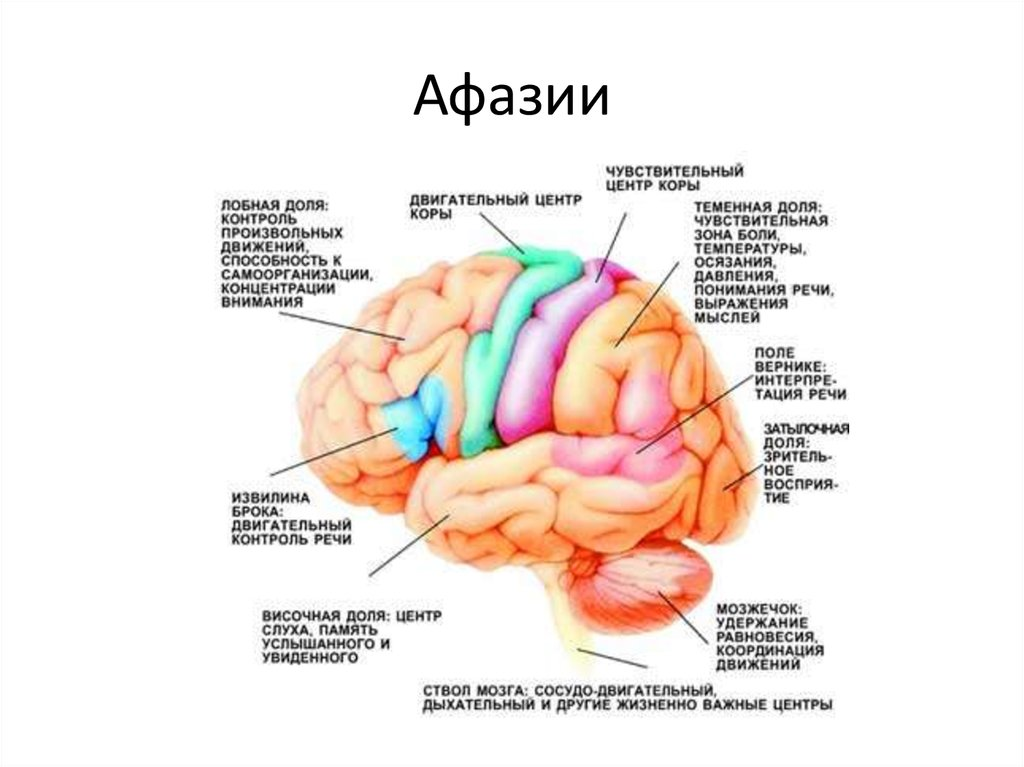 wernickes aphasia disorder essay A patient with wernicke's aphasia speaks incoherently because of the lack of their ability to understand spoken language due to the aphasia this can be caused by a stroke that blocks blood supply to wernicke's area, resulting of cell death in that region.