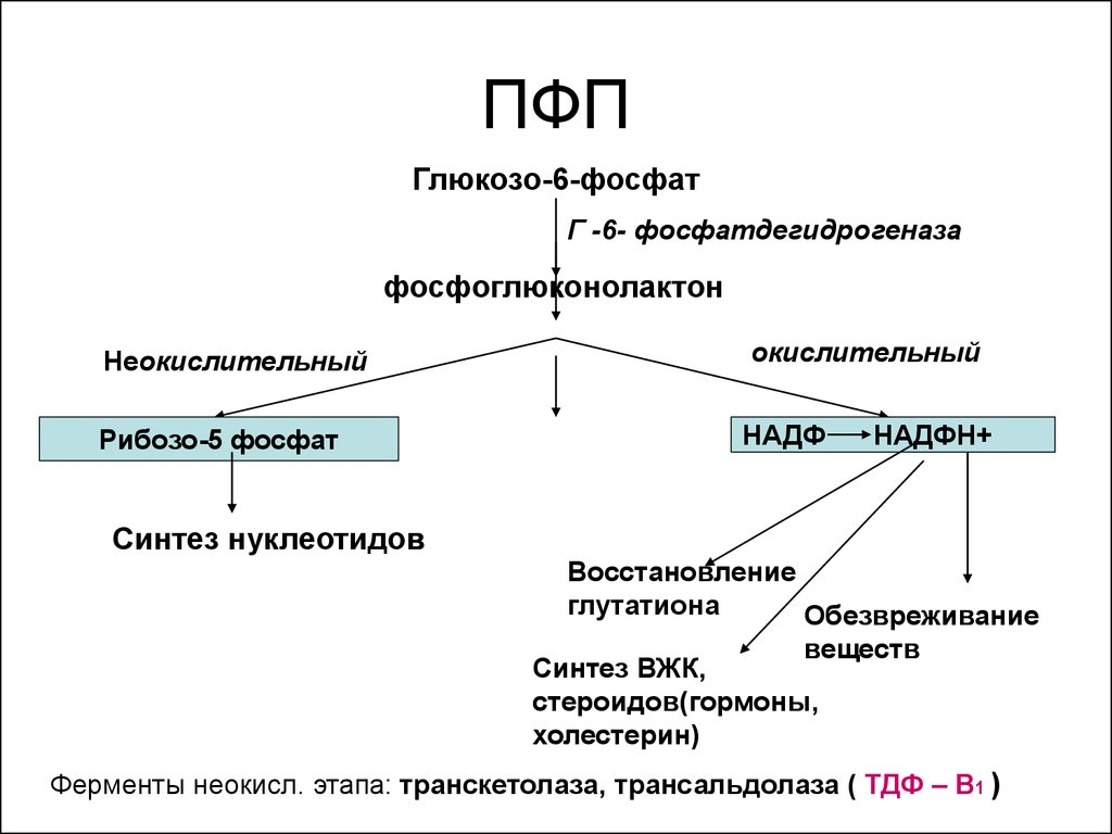 Метаболизм углеводов. Регуляция. Нарушения. (Лекция 6..