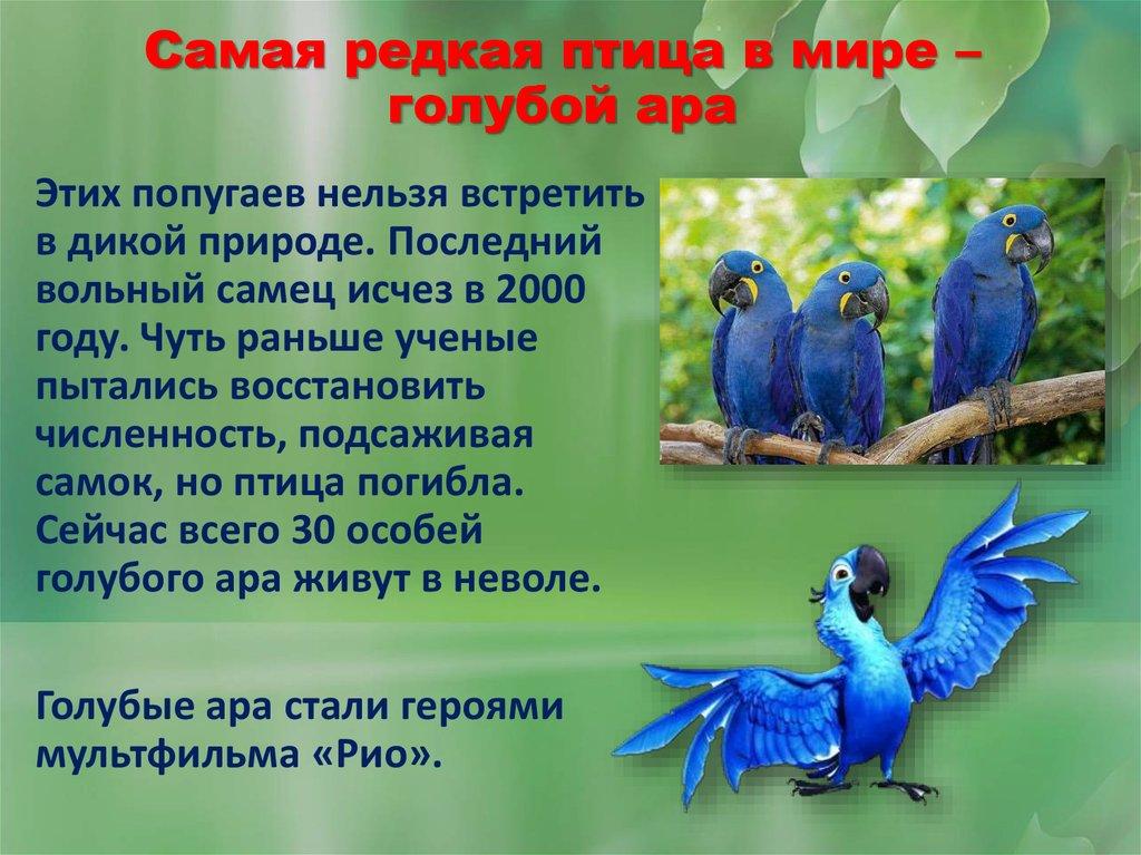 Редкие птицы картинки с кратким описанием