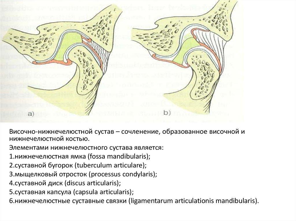 Гипермобильность нижнечелюстного суставов лечение артроза суставов в украине