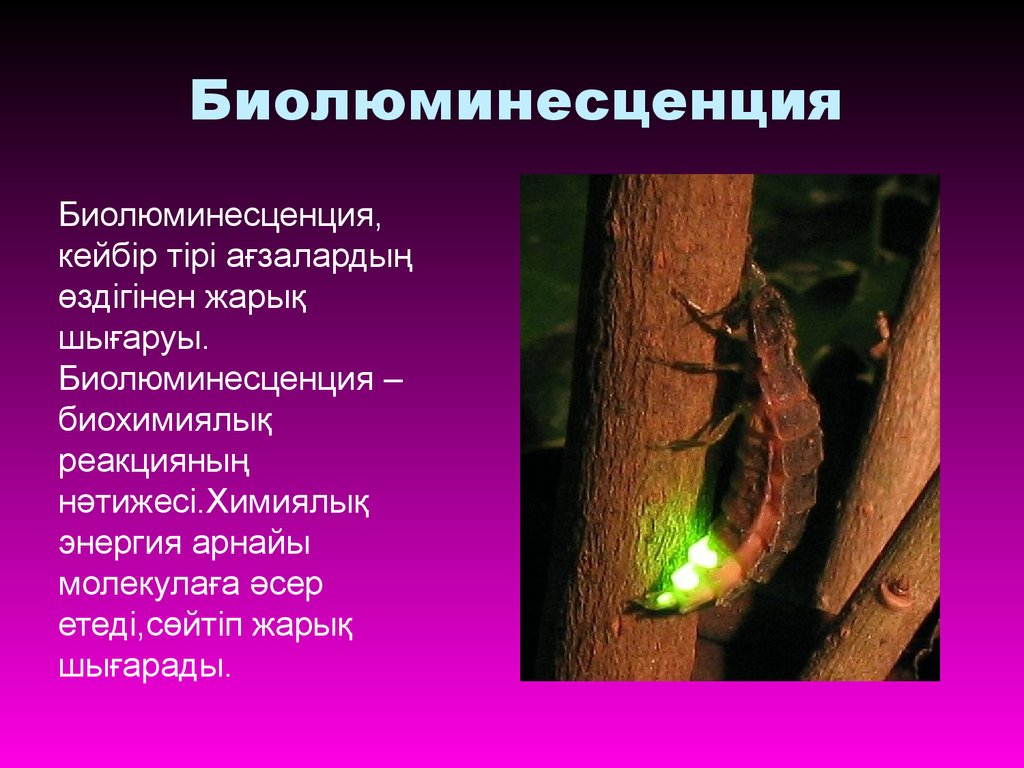 an analysis of bioluminescence that is both mysterious and relatively common Bioluminescence is the production and emission of light by a living organismit is a form of chemiluminescencebioluminescence occurs widely in marine vertebrates and invertebrates, as well as in some fungi, microorganisms including some bioluminescent bacteria and terrestrial invertebrates such as fireflies.