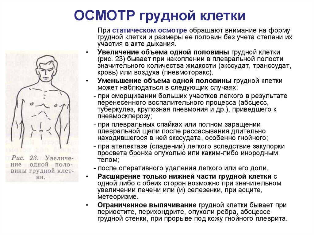 Легкие занимают грудной клетки