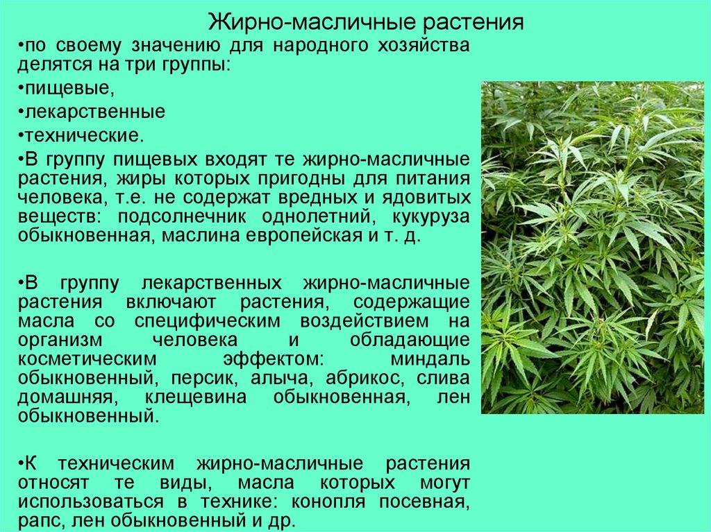 дакуаз это масличные растения фото и названия выбору теней