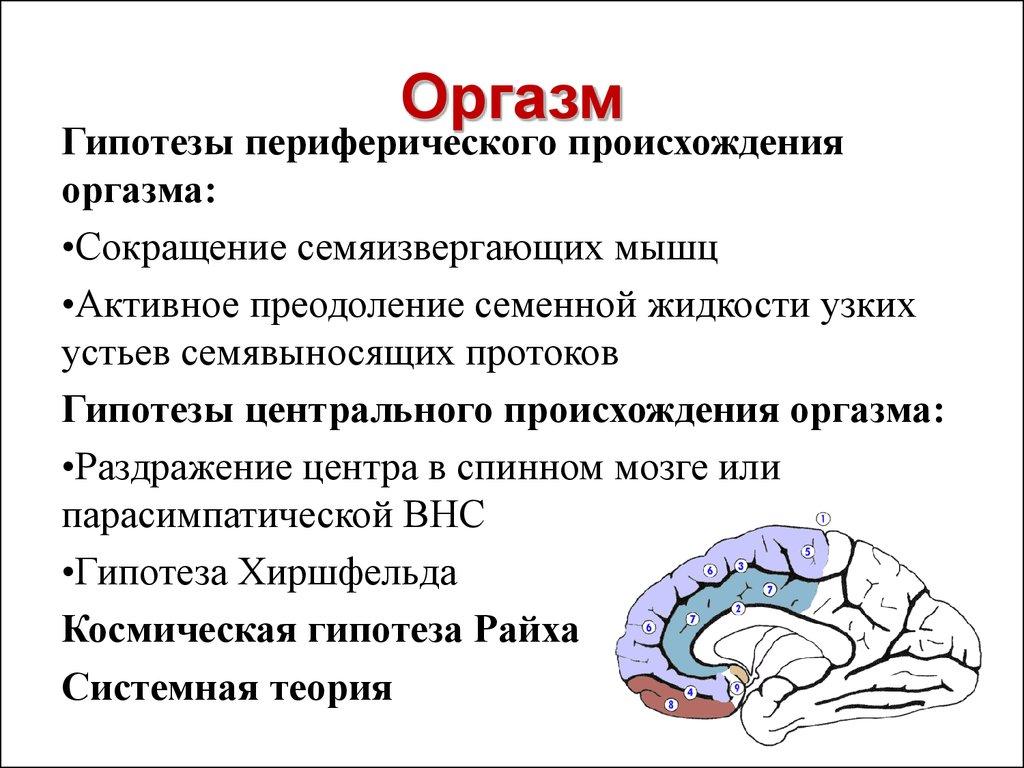 Анатомия оргазма