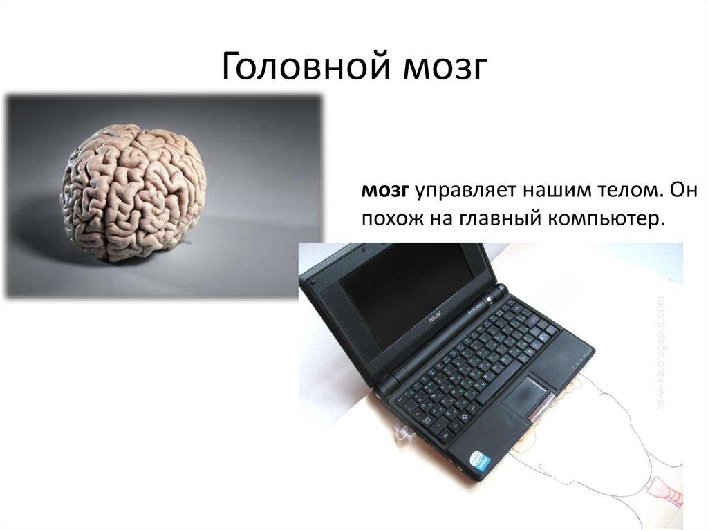 8класс биология урок головной мозг
