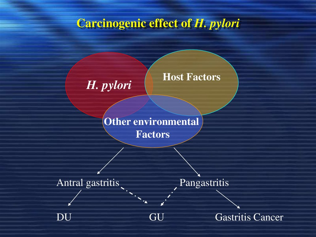 Carcinogenic effect of H. pylori