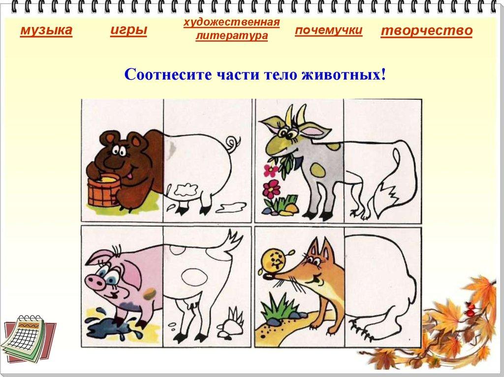 Картинки части тела домашних животных для детей