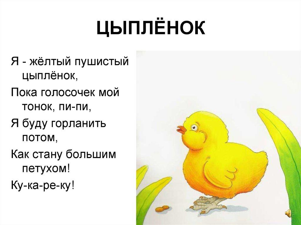 цыпленок стихи для самых маленьких свиней одно