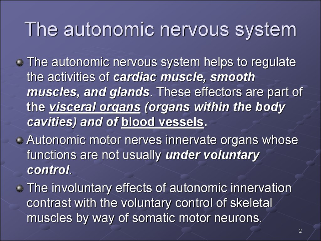 Functions of autonomic nervous system - презентация онлайн