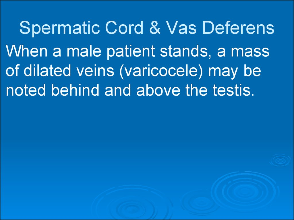 Spermatic Cord & Vas Deferens