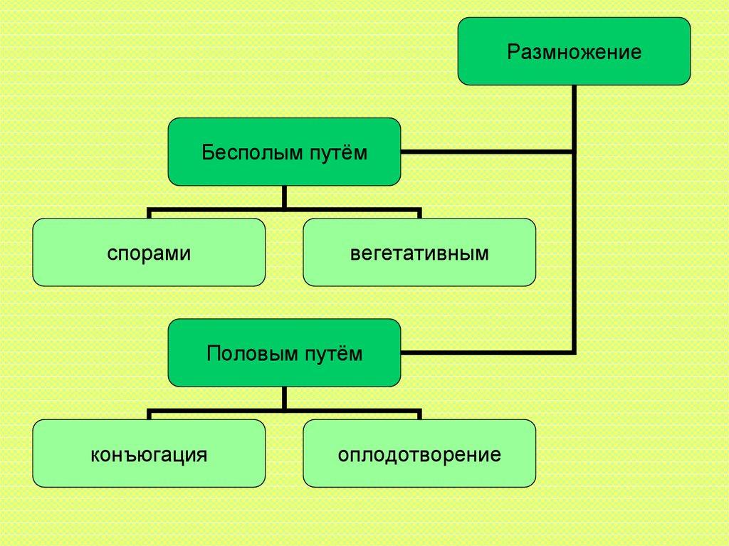 общая характеристика конфедерации курсовая