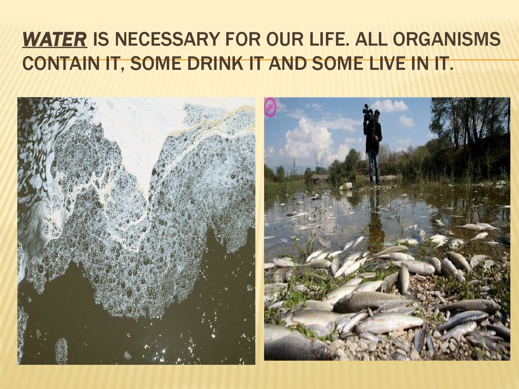 Water is necessary for our life. all organisms contain it, some drink it and some live in it.