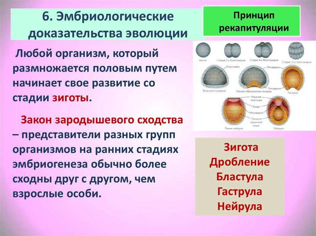 6. Эмбриологические доказательства эволюции