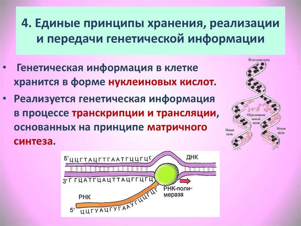 4. Единые принципы хранения, реализации и передачи генетической информации