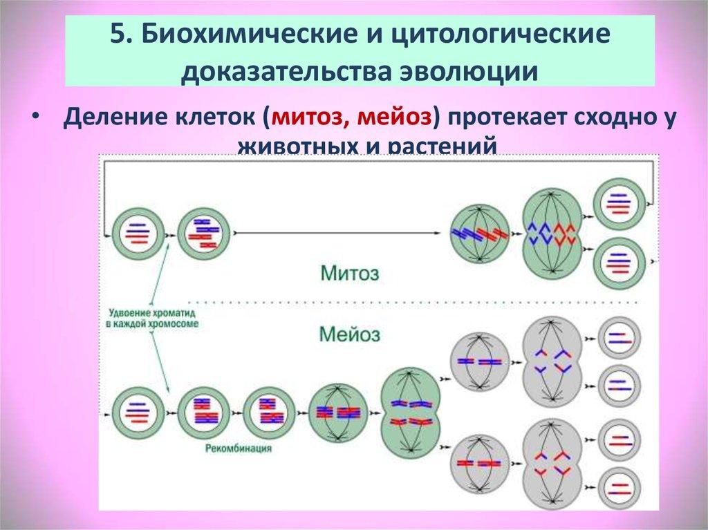 5. Биохимические и цитологические доказательства эволюции