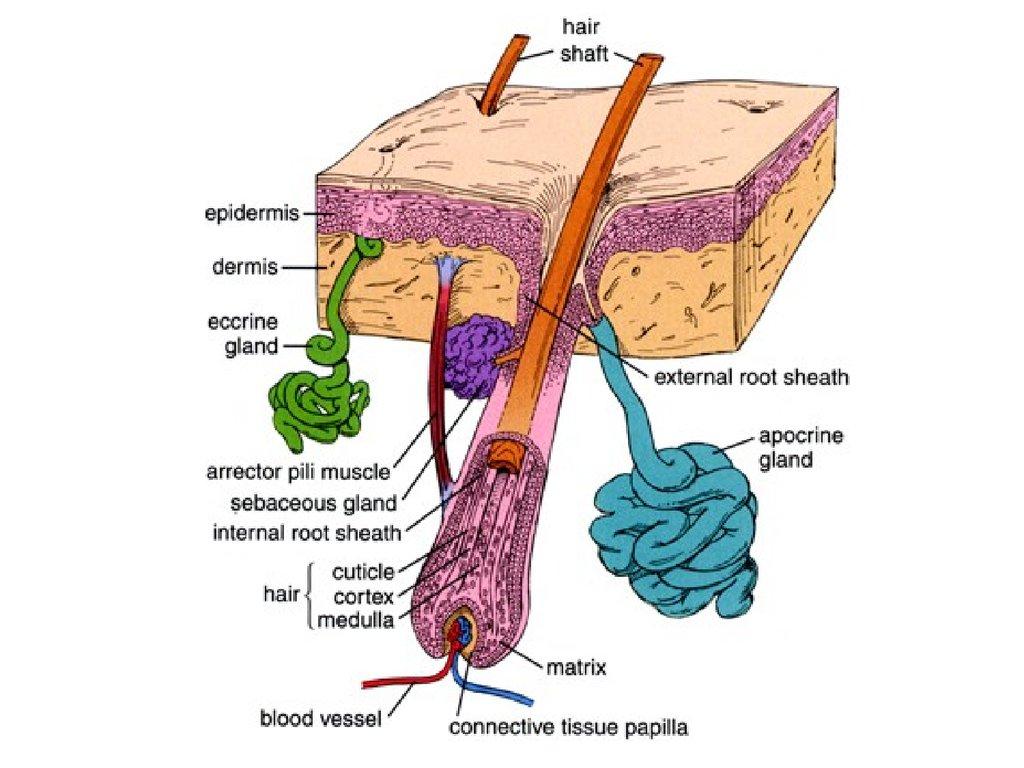 Заболевания кожи фото с названиями 3