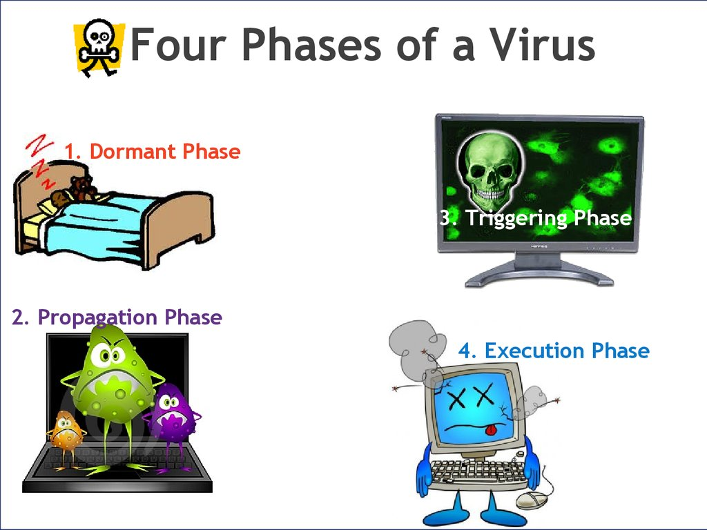 Four Phases of a Virus