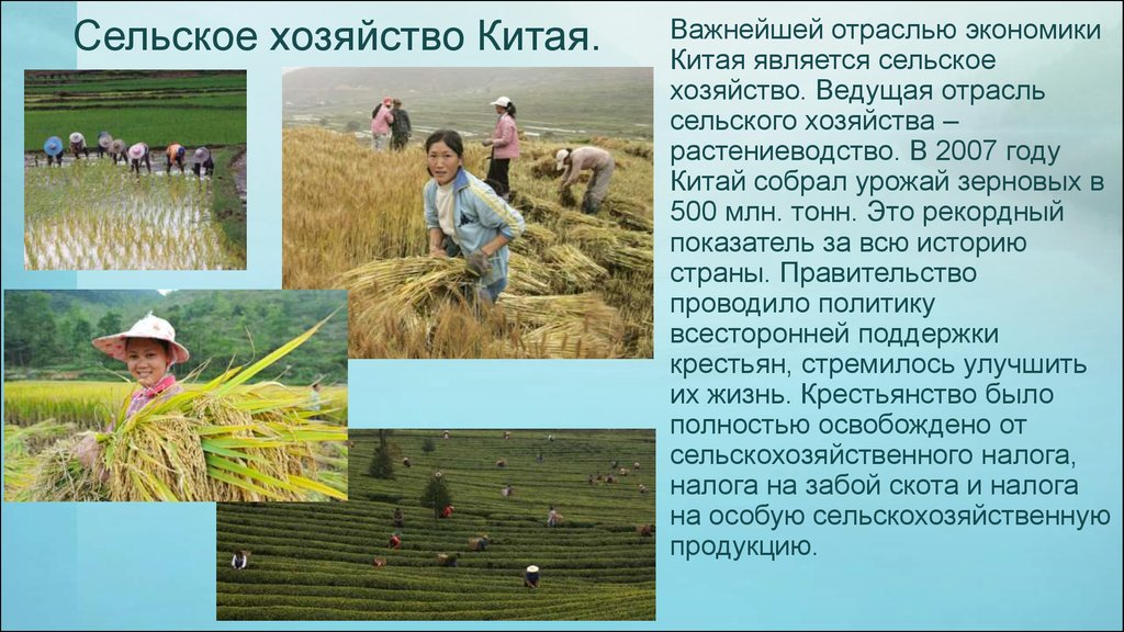 Сельское хозяйство китая фото и описание