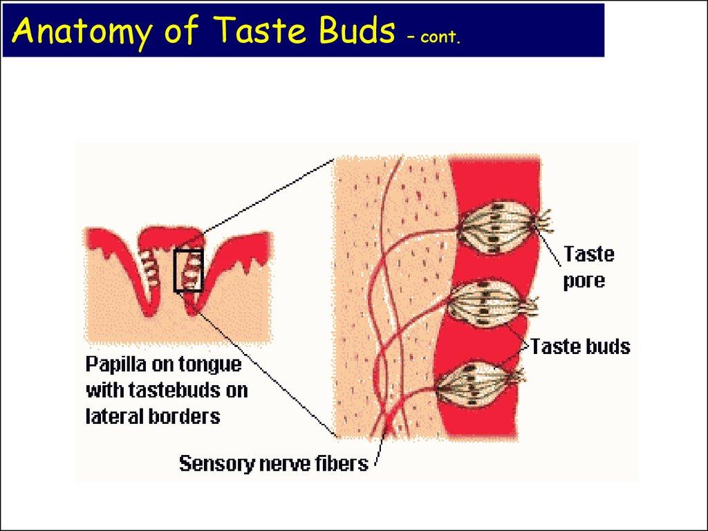 Chemical Senses Taste Online Presentation