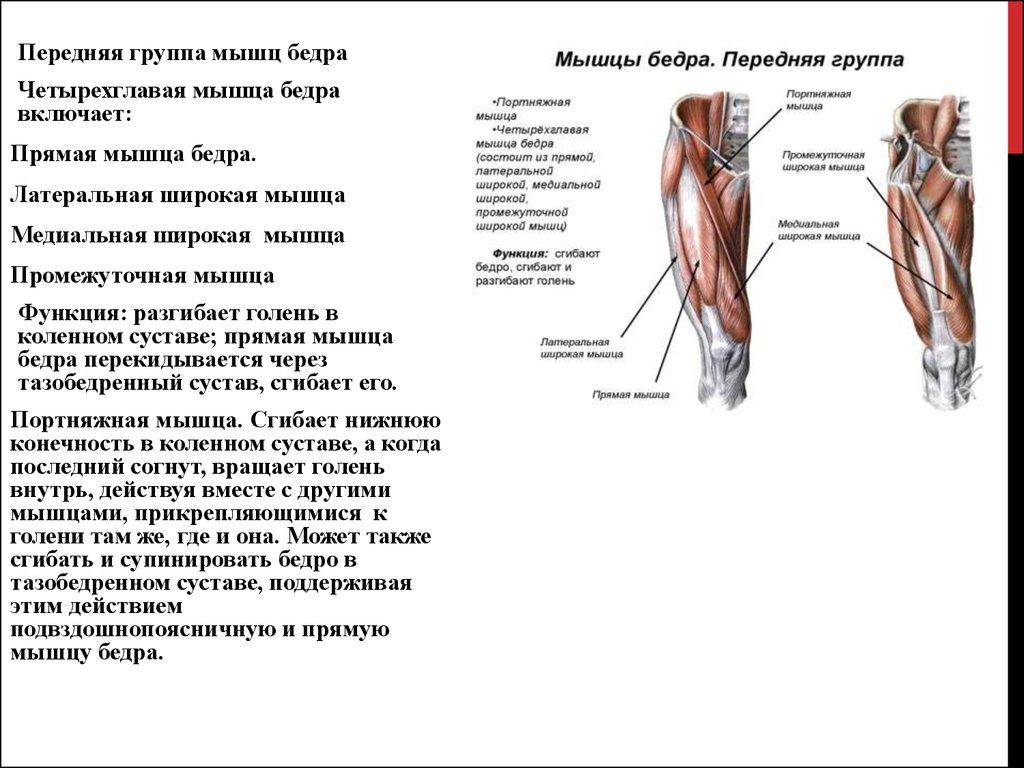 Сгибание тазобедренного сустава мышцы магнитотерапия суставы украина