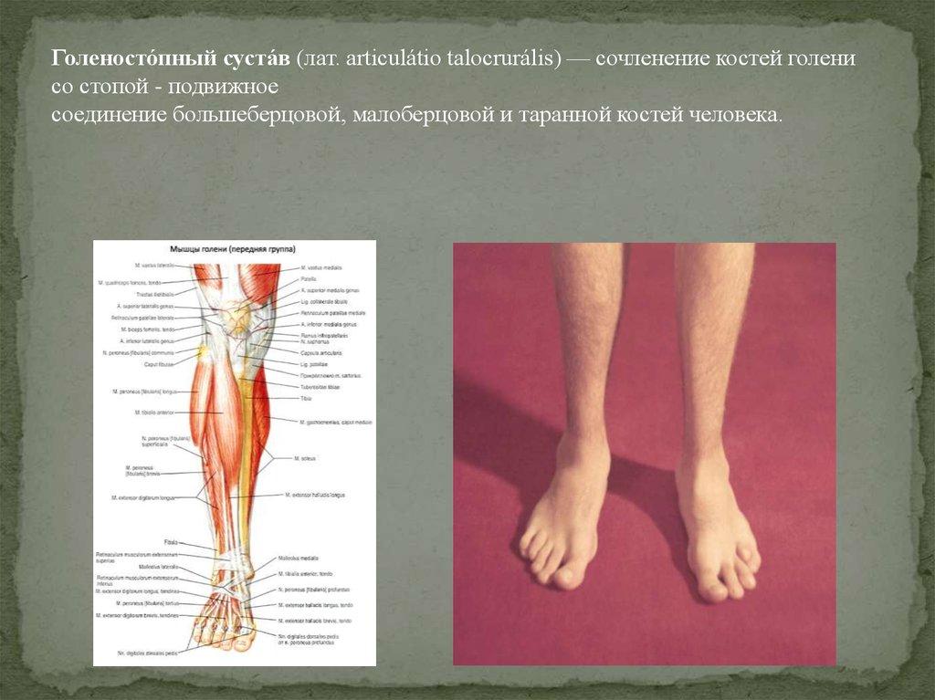 Боль голеностопном суставе причины